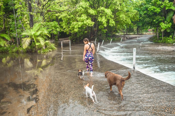 dogs playing in Cairns Daintree Rainforest Creek flood