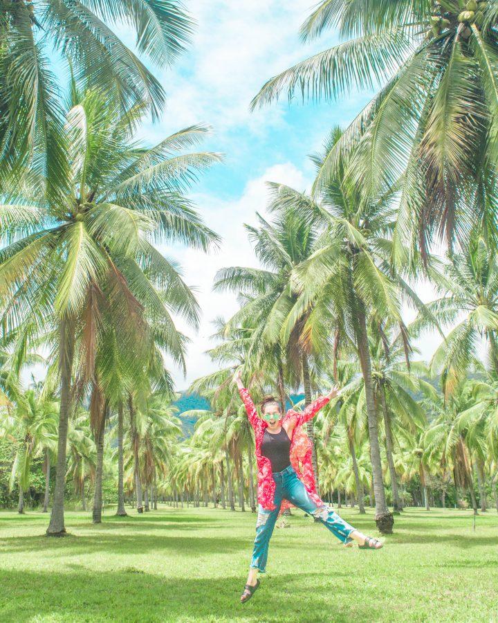 Coconut Plantation near Port Douglas Daintree jump