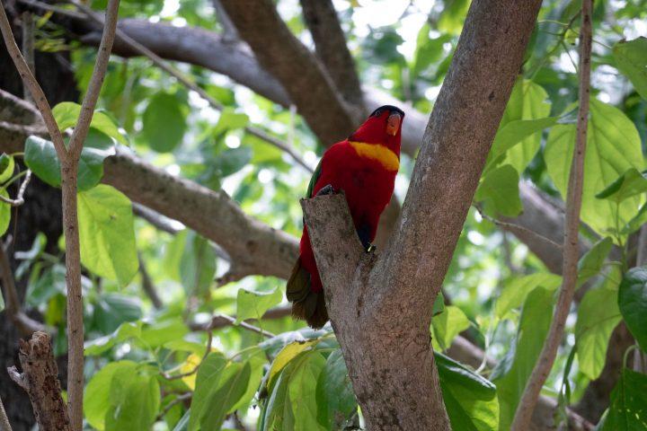 Kennedy Island Gizo Kennedy the bird Solomon Islands FatBoys Island Resort