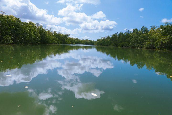 Gizo to Munda Solomon Islands mangroves